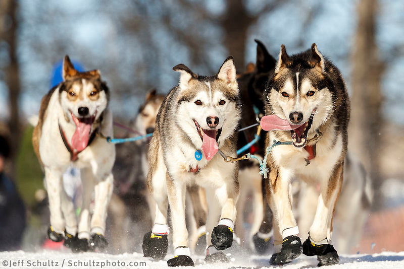 Paul Hansen dogs on the trail during the Ceremonial Start in Anchorage on Saturday March 4, 2017 <br /> <br /> Photo by Jeff Schultz/SchultzPhoto.com  (C) 2017  ALL RIGHTS RESVERVED