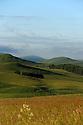 16/06/14 - CEZALIER - PUY DE DOME - FRANCE - Estives sur les plateaux volcaniques du Cezalier - Photo Jerome CHABANNE