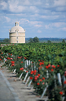 Europe/France/Aquitaine/33/Gironde/Pauillac: château Latour (AOC Pauillac)