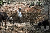 A young boy carries pile of soil on his head in Medawar Kalan in Ballia district of Uttar Pradesh, India. Photo: Sanjit Das/Panos