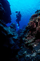 DIVER ON REEF<br /> Marine Biologist Studies Coral Reef<br /> Diver with underwater photography equipment explores reef and observes marine life.