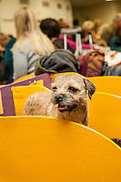 134th Westminster Dog Show