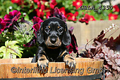 Bob, ANIMALS, REALISTISCHE TIERE, ANIMALES REALISTICOS, dogs, photos+++++,GBLA4350,#a#, EVERYDAY