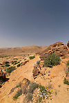Israel, the Negev desert. Petrified trees at the Large Crater