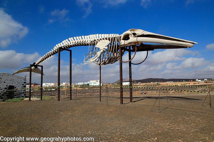 Sperm whale skeleton, Physeter macrocephalus, at Las Salinas del Carmen, Fuerteventura, Canary Islands, Spain