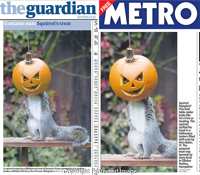 The Pumpkin Squirrel picture was published in the UK's Guardian newspaper, and the Metro, as well as featuring online...Pic: Chris Balcombe..