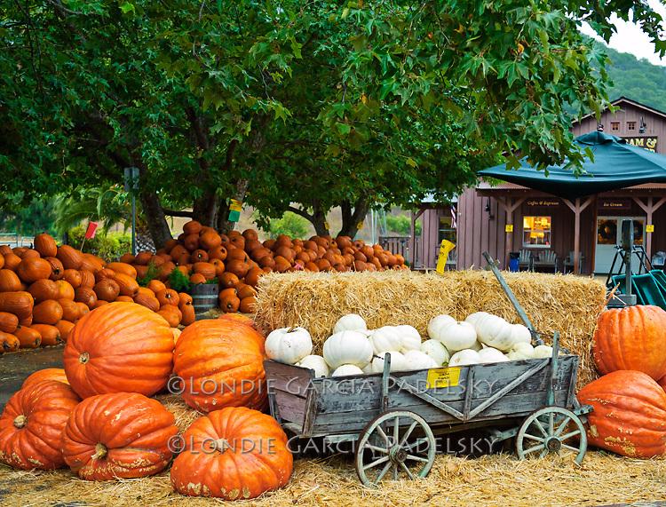 Pumpkin Farm, Avila Barn in San Luis Obispo COunty, Califoniad