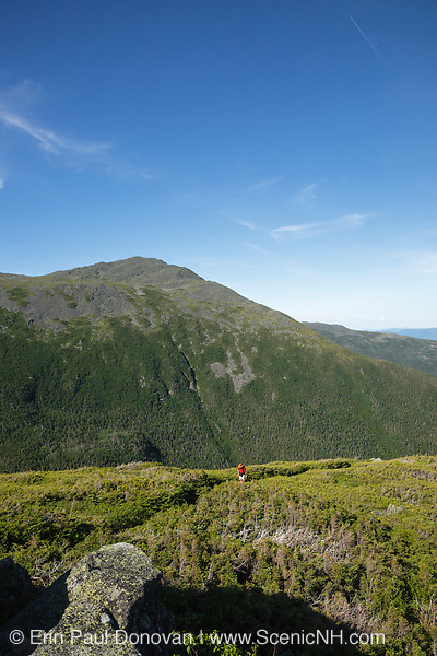 Hiker ascending the Six Husbands Trail in the Great Gulf Wilderness in Thompson and Meserve's Purchase, New Hampshire during the summer months; part of the Presidential Range in the White Mountains. Named after John Adams, 2nd President of the United States, Mount Adams is in the background.