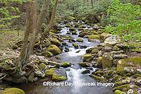 66745-038.17 Roaring Fork in spring, Roaring Fork Motor Trail, Great Smoky Mountain National Park, TN