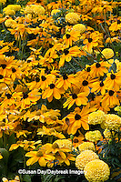 63821-20803 Indian Summer Black-eyed Susans (Rudbeckia Hirta 'Indian Summer')  Prairie Sun Black-eyed Susans (Rudbeckia Hirta 'Prairie Sun') Marvel Yellow Marigolds  Cantigny, Wheaton, IL