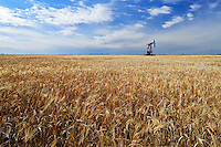 Oil pump jacks and wheat field<br /> Forget<br /> Saskatchewan<br /> Canada