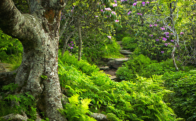 Summer trail at Craggy Gardens, Blue Ridge Parkway