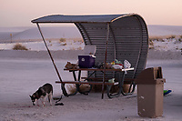 A dog stands near food under a picnic shelter at White Sands National Monument near Alamogordo, New Mexico, USA, on Sat., Dec. 30, 2017.