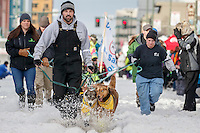 Monica Zappa's handlers bring her team down 4th avenue to the start line during the Ceremonial Start of the 2016 Iditarod in Anchorage, Alaska.  March 05, 2016