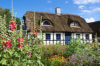 Denmark, Jutland, Alling, near Ry:Traditional half timbered thatched cottage with Hollyhocks | Daenemark, Juetland, Alling, bei Ry: traditionelles Reet gedecktes Haus mit zwei Ochsenaugen