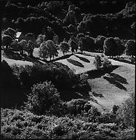 Europe/France/Auvergne/15/Cantal/Massif du Puy Mary :Habitat et paturages aux environs de Salers -Parc Naturel Régional des Volcans d'Auvergne