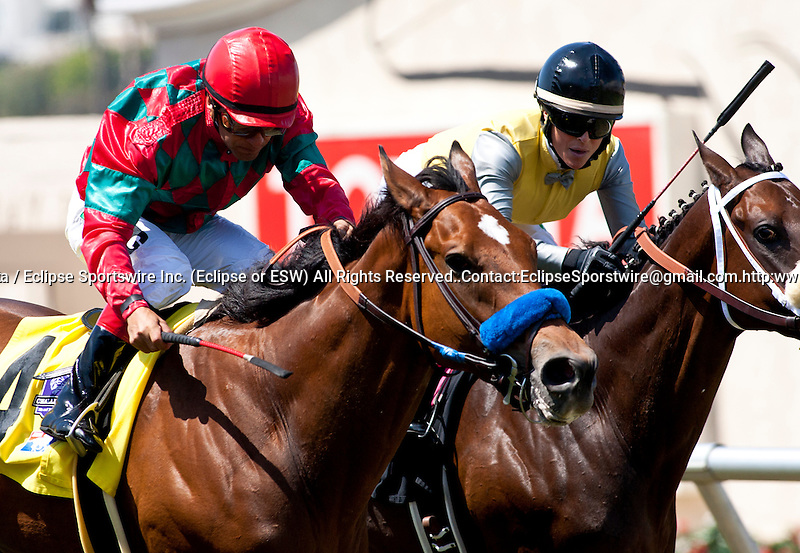 """Celtic New Year and Victor Espinoza win the Del Mar Handicap(GII) """"Win and You're in"""" Breeders' Cup Turf Division at Del Mar Thoroughbred Club in Del Mar, CA. August 28, 2011"""