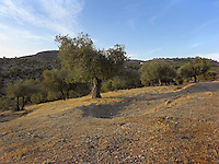 OR_LOCATION_45164