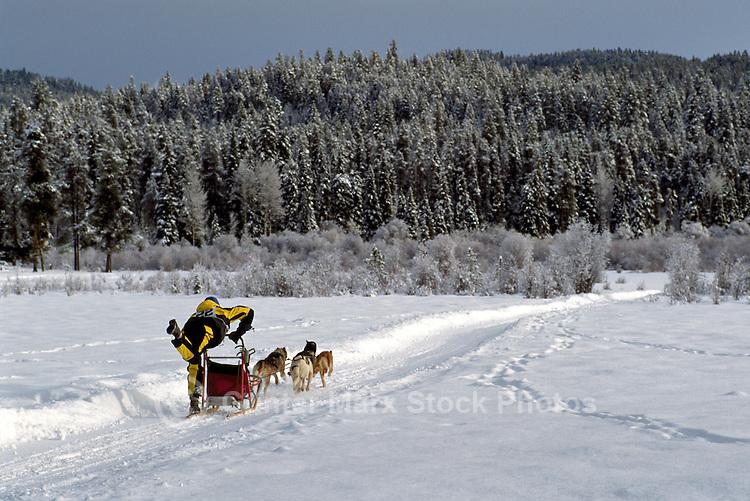 International Sled Dog Racing near Falkland, in the North Okanagan Region of British Columbia, Canada
