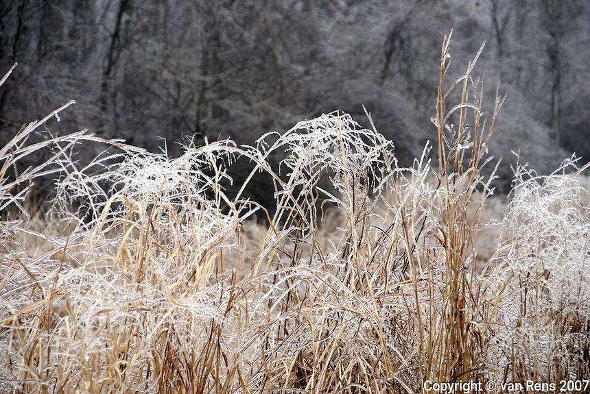 Ice Storm coats the prairie grasses with crystaline casing,