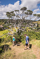 Walking on Tapeka Point, Russell, Bay of Islands, Northland Region, North Island, New Zealand