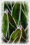 Photograph with painting like qualities of cactus, Queen Victoria's Lace