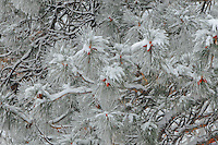 &quot;THEN THE BOUGH BREAKS&quot;<br />