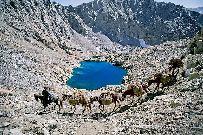 Cowboy leading pack mules over a high mountain pass in the Sierra Nevada, California
