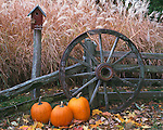 Bureau, County, IL<br /> Fall scene of pumpkins, birdhouse, weathered fence and wagon wheel with pampas grass in the background