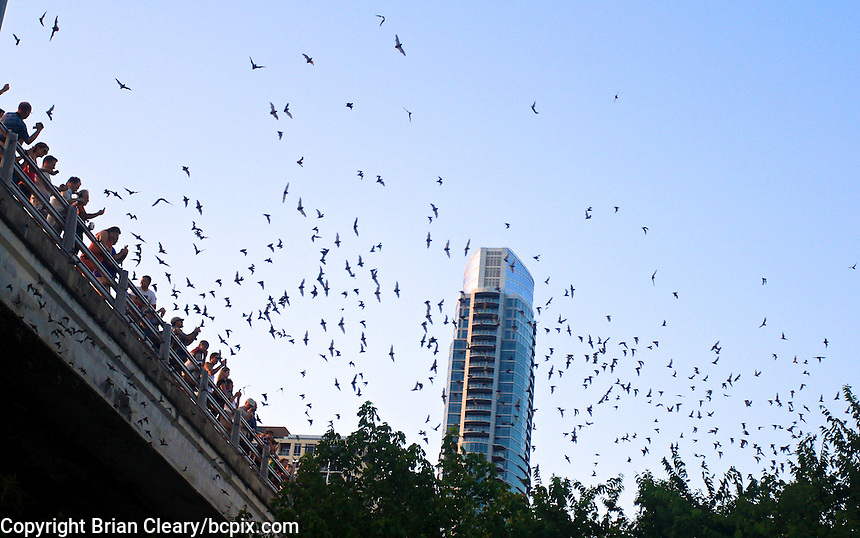 Thousands of Bats leave their roost under the Congress Avenue Bridge to begin their nightly search for food, Austin, TX, August 2011.    (Photo by Brian Cleary/www.bcpix.com)