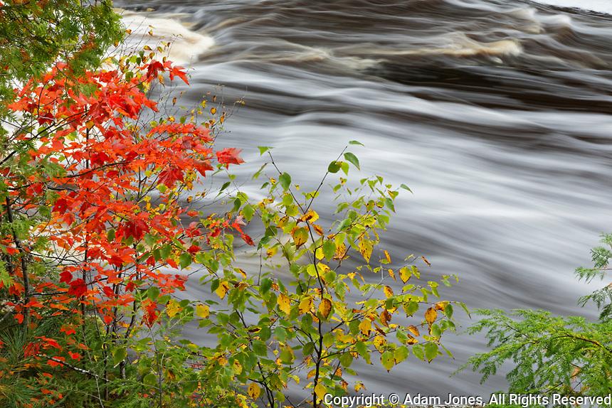 Red maple tree and cascade belowTahquamenon Falls, Tahquamenon Falls State Park, Upper Peninsula, Michigan