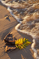 An American Mountain Ash leaf lies on the Lake Superior shore in the sand and the surf as the last light of day washes over it in autumn, Twelve-Mile Beach, Pictured Rocks National Lakeshore, Alger County, Michigan.