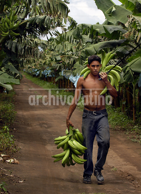 Plantacion de platanos en Rivas,  sur de Nicaragua., cerca de la frontera con Costa Rica+economia, banano, agricultura *Plantains in Rivas, southern Nicaragua, near the border with Costa Rica+economy, banana, agriculture *Plantation de bananes à Rivas, près de la frontière avec le Costa Rica. +agriculture, économie, commerce, exportations, cultures