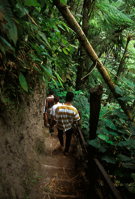 Hikers walk down steep trail, Les Gorges de la Falaise, canyon near village of Ajoupa Bouillon, Martinique, French West Indies