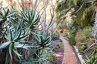 Brick path through tropical plant garden with Aloe and palms at Lotusland, Santa Barbara California