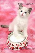 Xavier, ANIMALS, cats, photos, SPCHCATS717,#A# Katzen, gatos