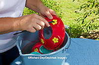 01162-12808 Woman cleaning hummingbird feeder, Marion County, IL