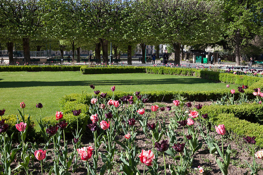 Flowers in Notre Dame Park in Spring, Paris, France