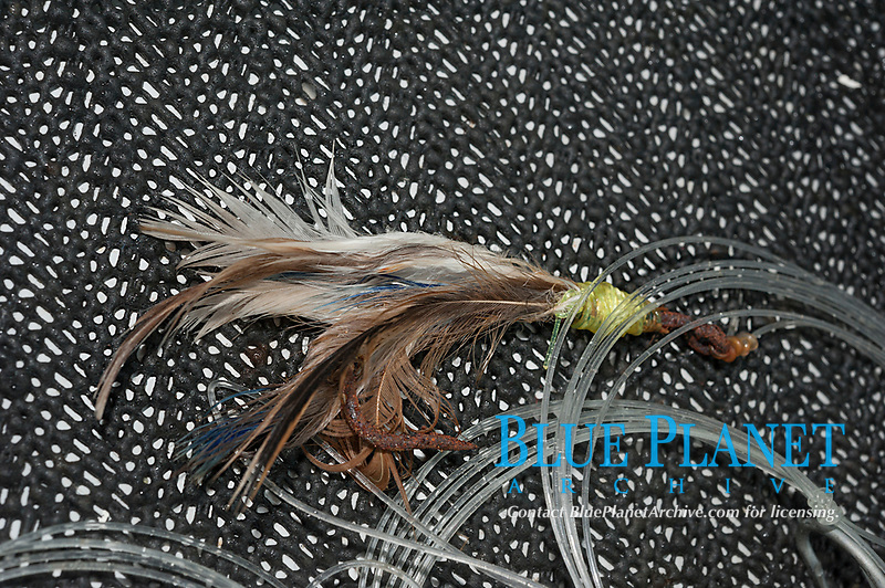 hand-tied chicken feather fly lure aboard Reel Addiction, Vava'u, Kingdom of Tonga, South Pacific Ocean