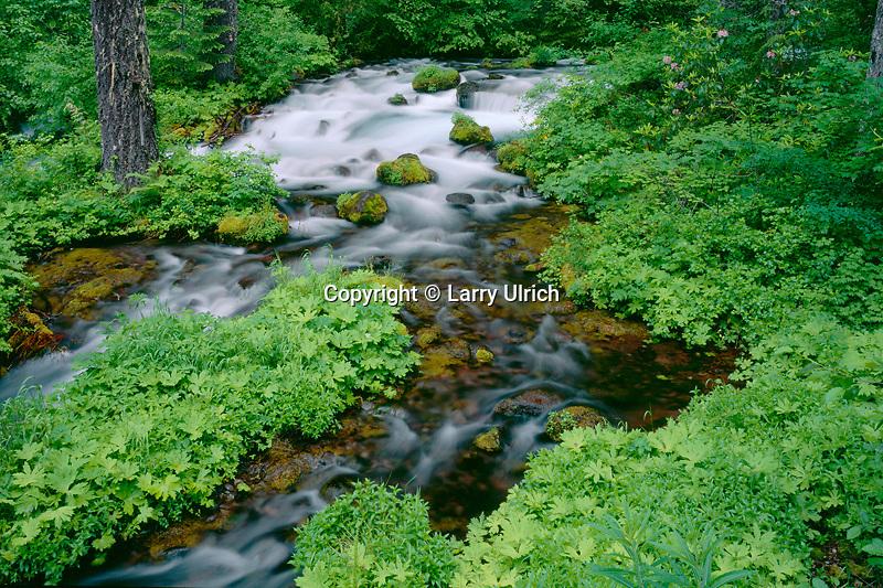 Roaring River<br /> Willamette National Forest<br /> Cascade Range,  Oregon