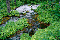 Roaring River<br />
