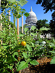 Small garden grows outside the State Capitol of Wisconsin.