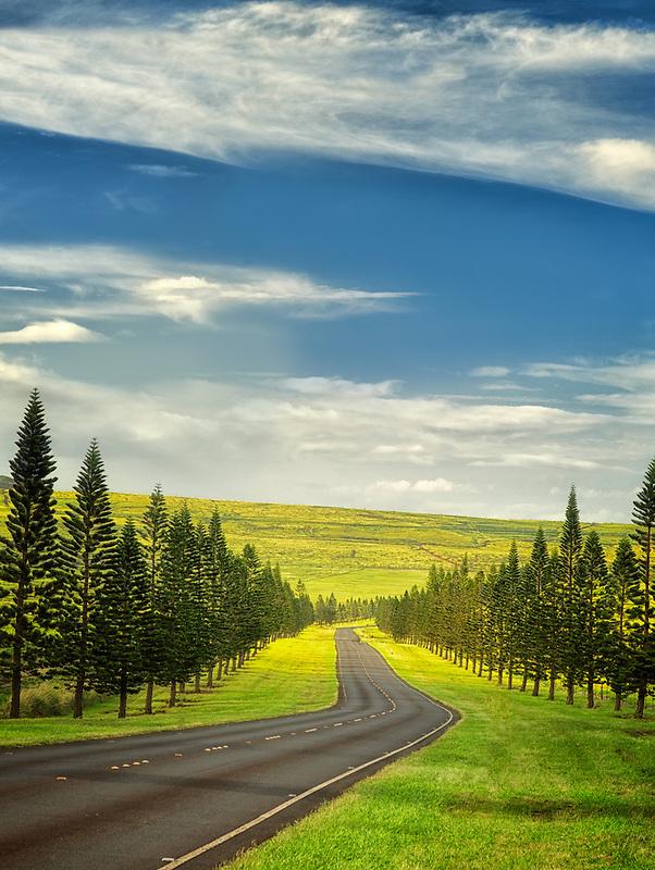 Main Road on Lanai lined with Cook Island Pines. Lanai, Hawaii