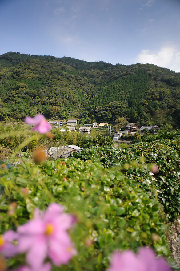 The local village, Marutou Wasabi, Shimoda, Japan, October 17, 2010.
