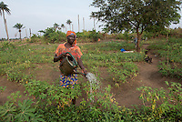 BRAC PROJECT, BRAC kitchen garden. Sallay Mansaray & Tennah Kamara working in the fields. Macomba, Waterloo, Sierra Leone, Africa. I took this photo in Macomba, Sierra Leone while on assignment in Africa for BRAC, an international non-profit that focuses on alleviating poverty through the empowerment of skills training and micro-lending especially for women in developing countries. In this particular project BRAC has donated seeds and watering cans for women to work in kitchen gardens to grow vegetables for their families and sell in the local market as small income generating project.