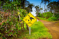 Nene Crossing - Please Do Not Feed sign at Kalalau Valley Lookout, Nene or Hawaiian Goose, Branta (= Nescochen) sandvicensis, endemic to Hawaii and severely endangered, Na Pali coast, Kauai, Hawaii