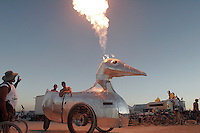 "BLACK ROCK CITY, NV - AUGUST 27,2008:  ""Battle Duck"", an art car created by Bart Dorsa, pictured center, in honor of his father Frank's, left, 69th birthday, August, 27, 2008. The Burning Man Event 2008 kicks into full gear as participants from around the world converge in Nevada for the annual art event. The event, which culminates with the burning of large installation art over the weekend, attracts over 30,000 people annually."