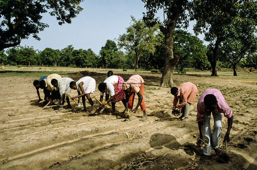villagers sowing sorgum