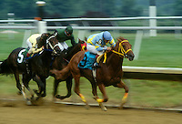 Arabian Horse Racing..