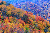 Fall color near Newfound Gap road in Great Smoky Mountains National Park, North Carolina